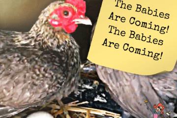 The-Babies-Are-Coming-The-Babies-Are-Coming-square-title-image